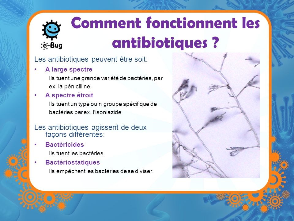Comment Les Antibiotiques Combattent Les Infections