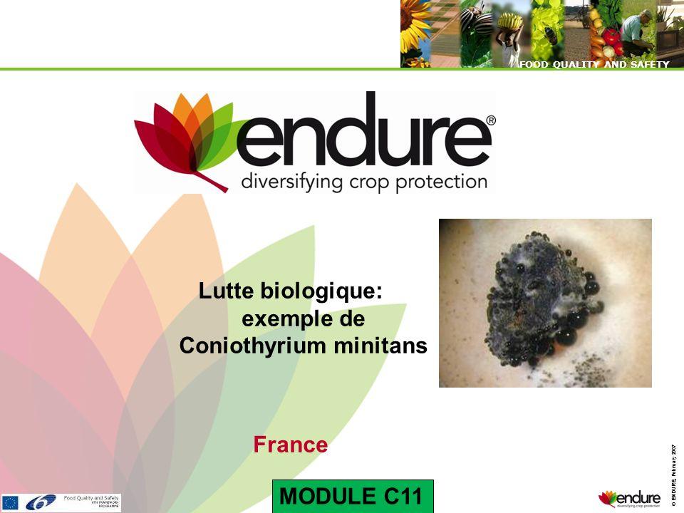 © ENDURE, February 2007 FOOD QUALITY AND SAFETY © ENDURE, February 2007 FOOD QUALITY AND SAFETY Lutte biologique: exemple de Coniothyrium minitans Fra