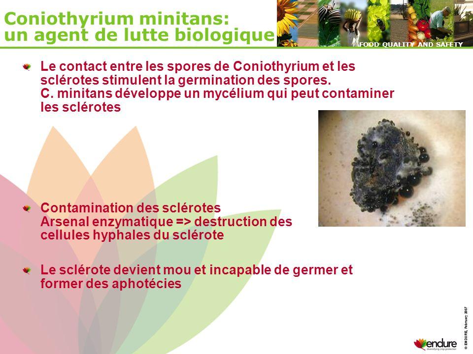 © ENDURE, February 2007 FOOD QUALITY AND SAFETY © ENDURE, February 2007 FOOD QUALITY AND SAFETY Coniothyrium minitans: un agent de lutte biologique Le