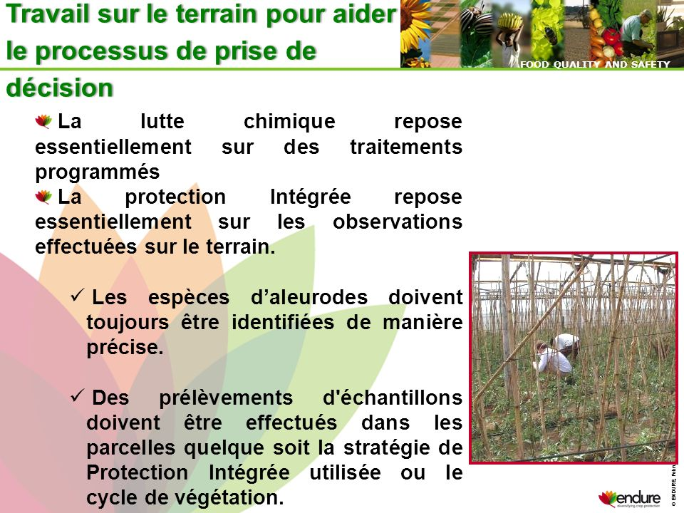 © ENDURE, February 2007 FOOD QUALITY AND SAFETY © ENDURE, February 2007 FOOD QUALITY AND SAFETY Travail sur le terrain pour aider le processus de pris