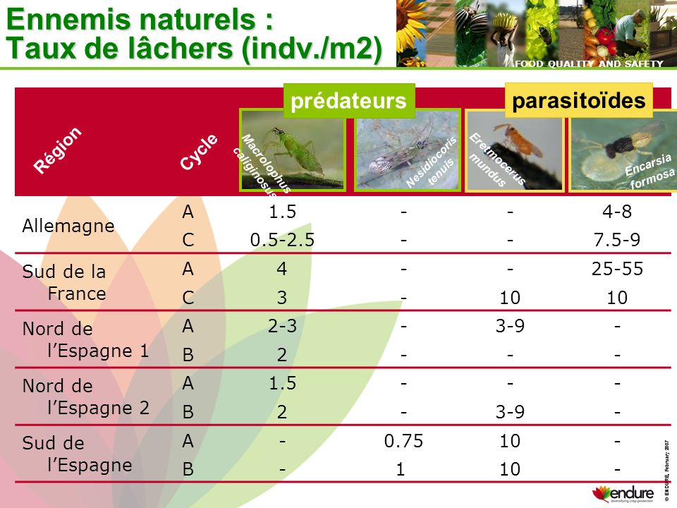 © ENDURE, February 2007 FOOD QUALITY AND SAFETY © ENDURE, February 2007 FOOD QUALITY AND SAFETY Ennemis naturels : Taux de lâchers (indv./m2) Allemagn