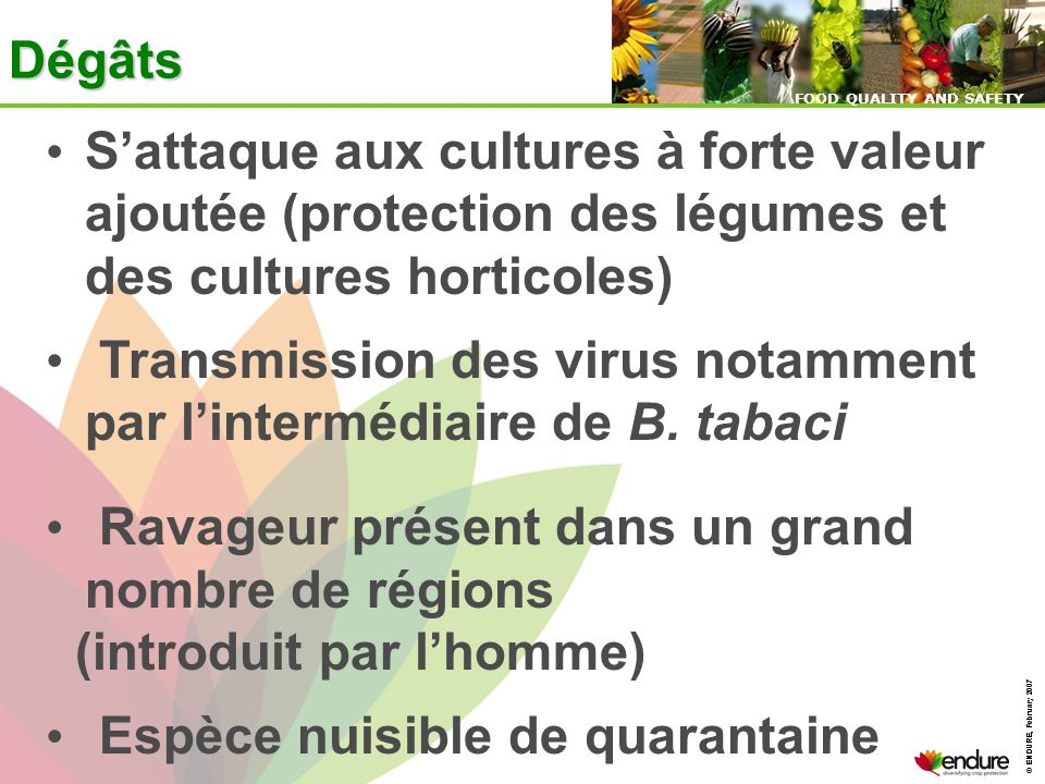 © ENDURE, February 2007 FOOD QUALITY AND SAFETY © ENDURE, February 2007 FOOD QUALITY AND SAFETY Sattaque aux cultures à forte valeur ajoutée (protecti
