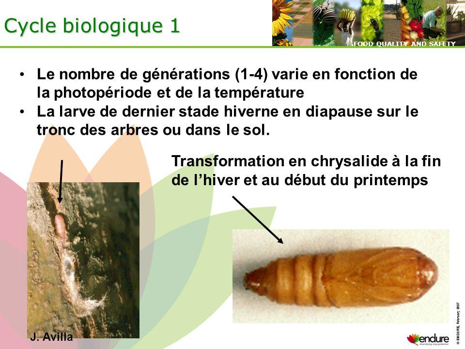 © ENDURE, February 2007 FOOD QUALITY AND SAFETY © ENDURE, February 2007 FOOD QUALITY AND SAFETY Cycle biologique 1 J. Avilla Le nombre de générations