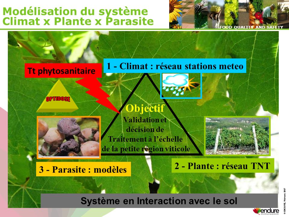 © ENDURE, February 2007 FOOD QUALITY AND SAFETY © ENDURE, February 2007 FOOD QUALITY AND SAFETY Modélisation du système Climat x Plante x Parasite 2 -