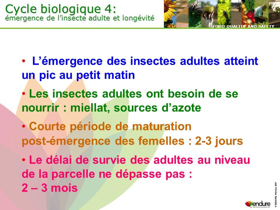 © ENDURE, February 2007 FOOD QUALITY AND SAFETY © ENDURE, February 2007 FOOD QUALITY AND SAFETY Cycle biologique 4: émergence de linsecte adulte et lo