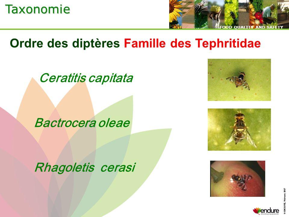 © ENDURE, February 2007 FOOD QUALITY AND SAFETY © ENDURE, February 2007 FOOD QUALITY AND SAFETY Ordre des diptères Famille des Tephritidae Ceratitis c