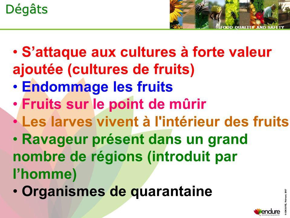 © ENDURE, February 2007 FOOD QUALITY AND SAFETY © ENDURE, February 2007 FOOD QUALITY AND SAFETY Dégâts Sattaque aux cultures à forte valeur ajoutée (c