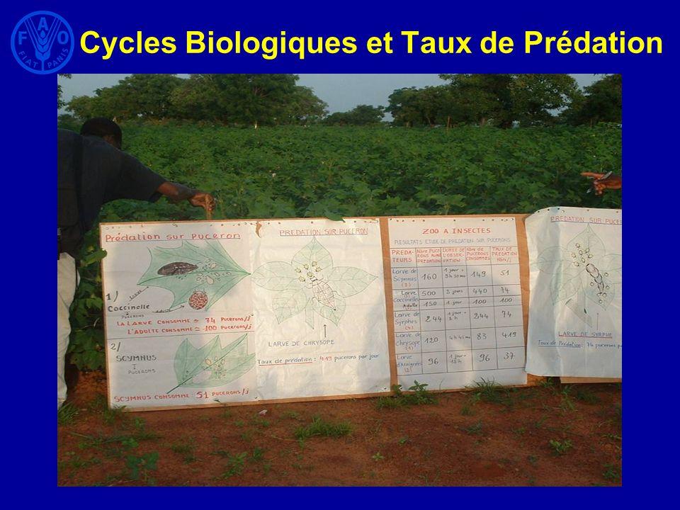 Cycles Biologiques et Taux de Prédation
