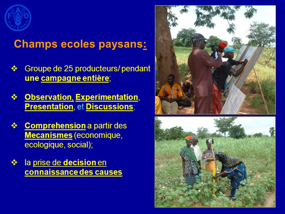 Champs ecoles paysans: Groupe de 25 producteurs/ pendant une campagne entière; Observation, Experimentation, Presentation, et Discussions; Comprehensi