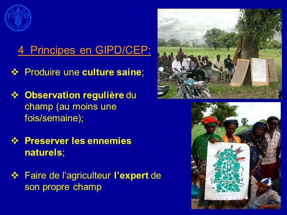 4 Principes en GIPD/CEP: Produire une culture saine; Observation regulière du champ (au moins une fois/semaine); Preserver les ennemies naturels; Fair