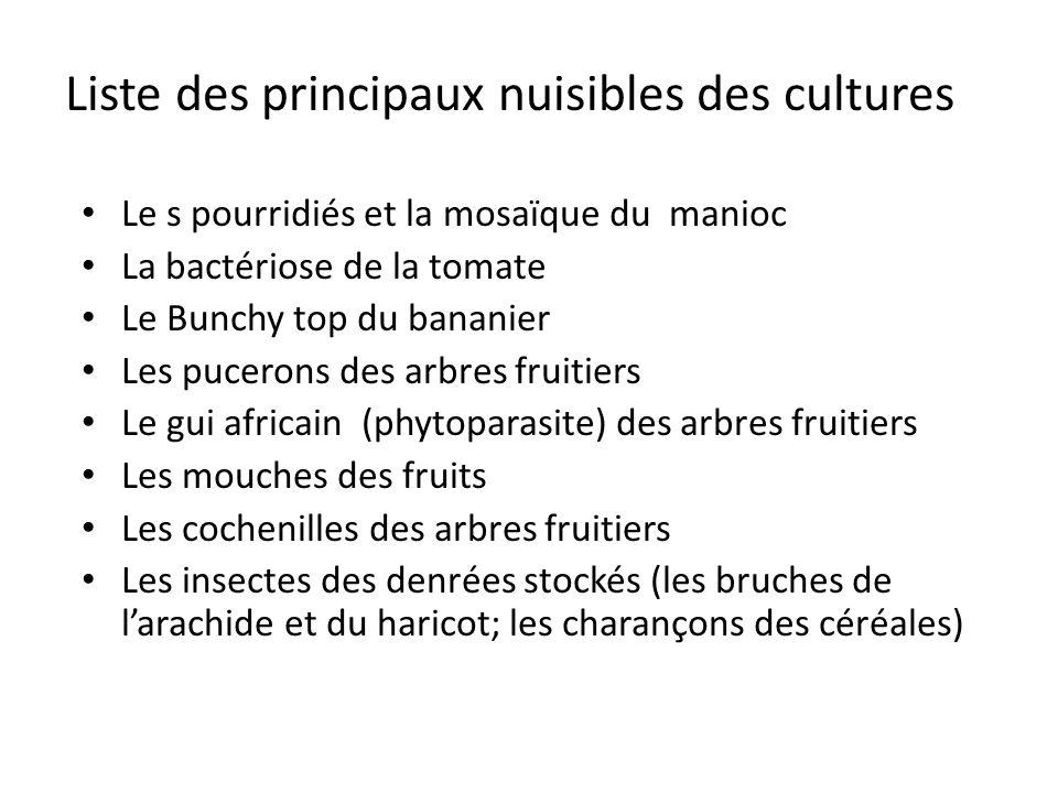 Le s pourridiés et la mosaïque du manioc La bactériose de la tomate Le Bunchy top du bananier Les pucerons des arbres fruitiers Le gui africain (phyto