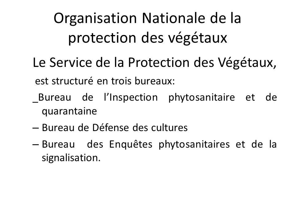 Organisation Nationale de la protection des végétaux Le Service de la Protection des Végétaux, est structuré en trois bureaux: _Bureau de lInspection
