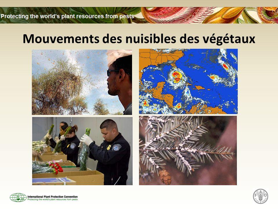 Mouvements des nuisibles des végétaux