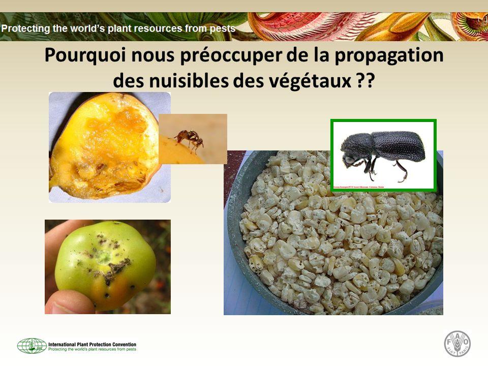Pourquoi nous préoccuper de la propagation des nuisibles des végétaux ??