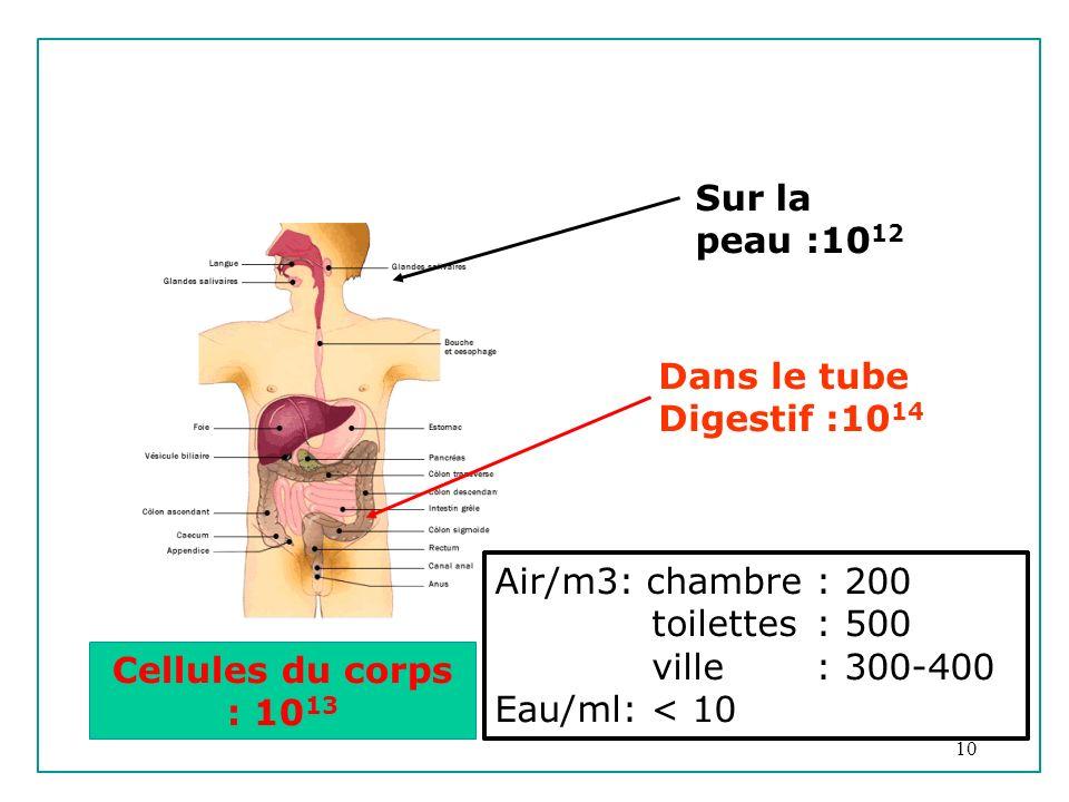 10 Dans le tube Digestif :10 14 Xf<s Cellules du corps : 10 13 Sur la peau :10 12 Air/m3: chambre: 200 toilettes: 500 ville: 300-400 Eau/ml: < 10