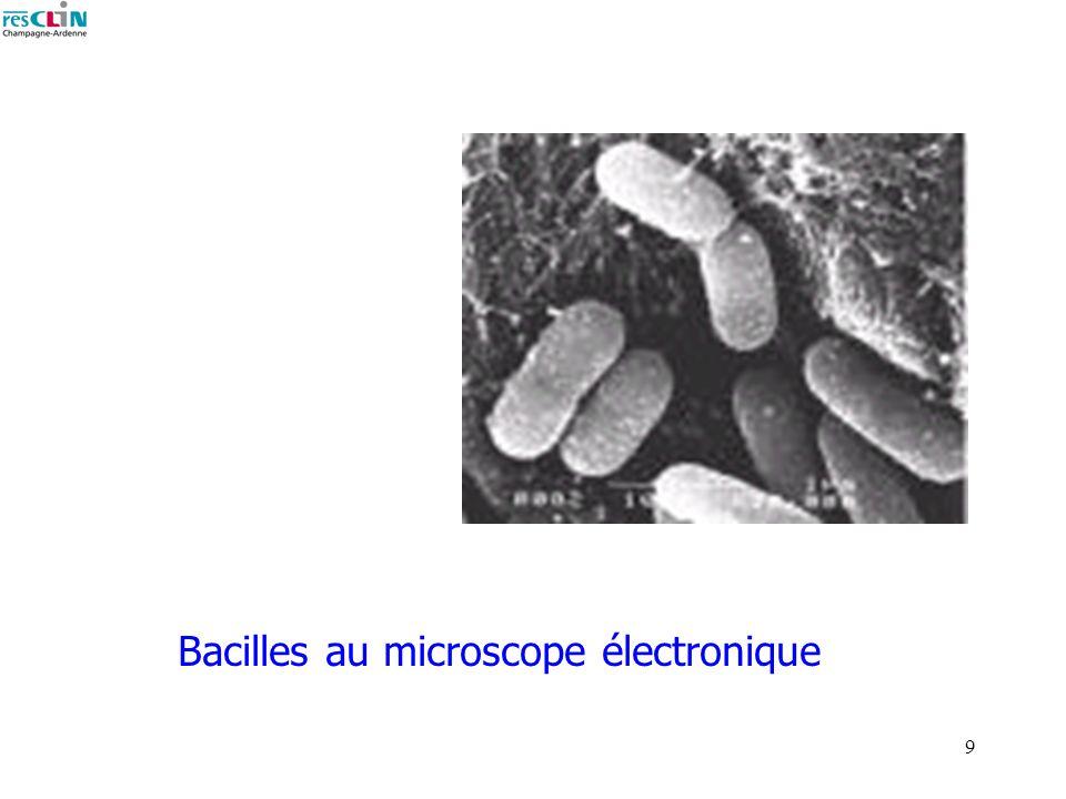 9 Bacilles au microscope électronique