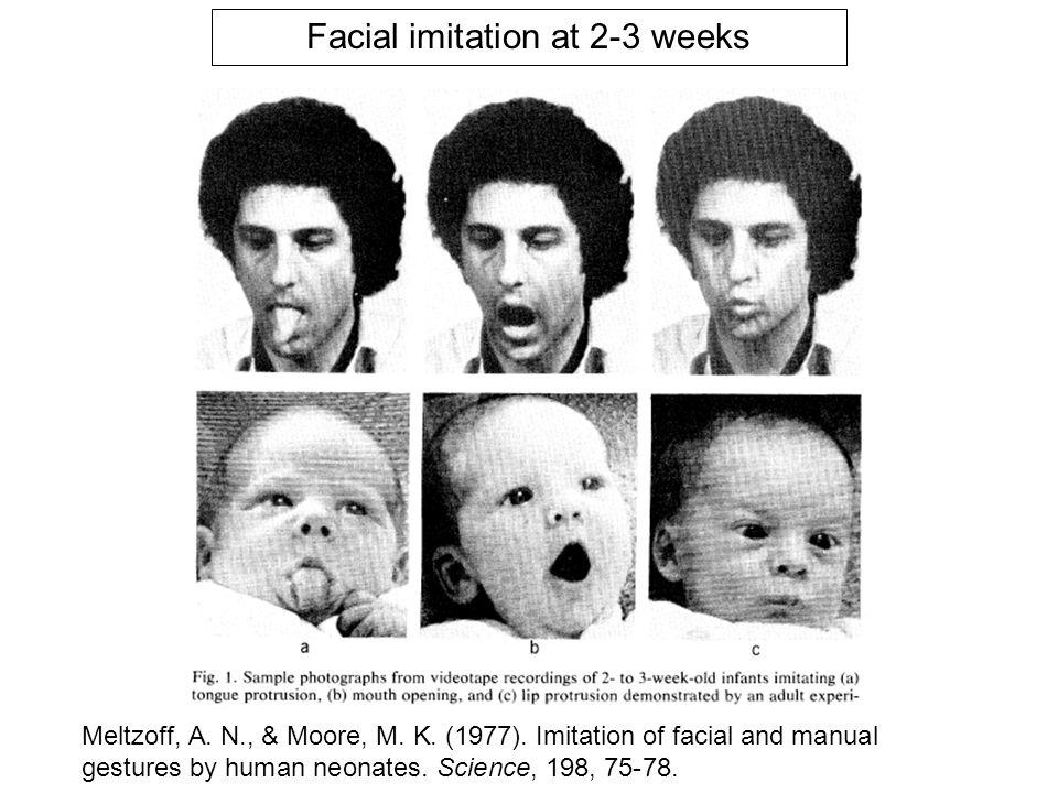 importance de l'input auditif et visuel; convergence vers le modèle adulte (hypothèse de l'interaction) orientation