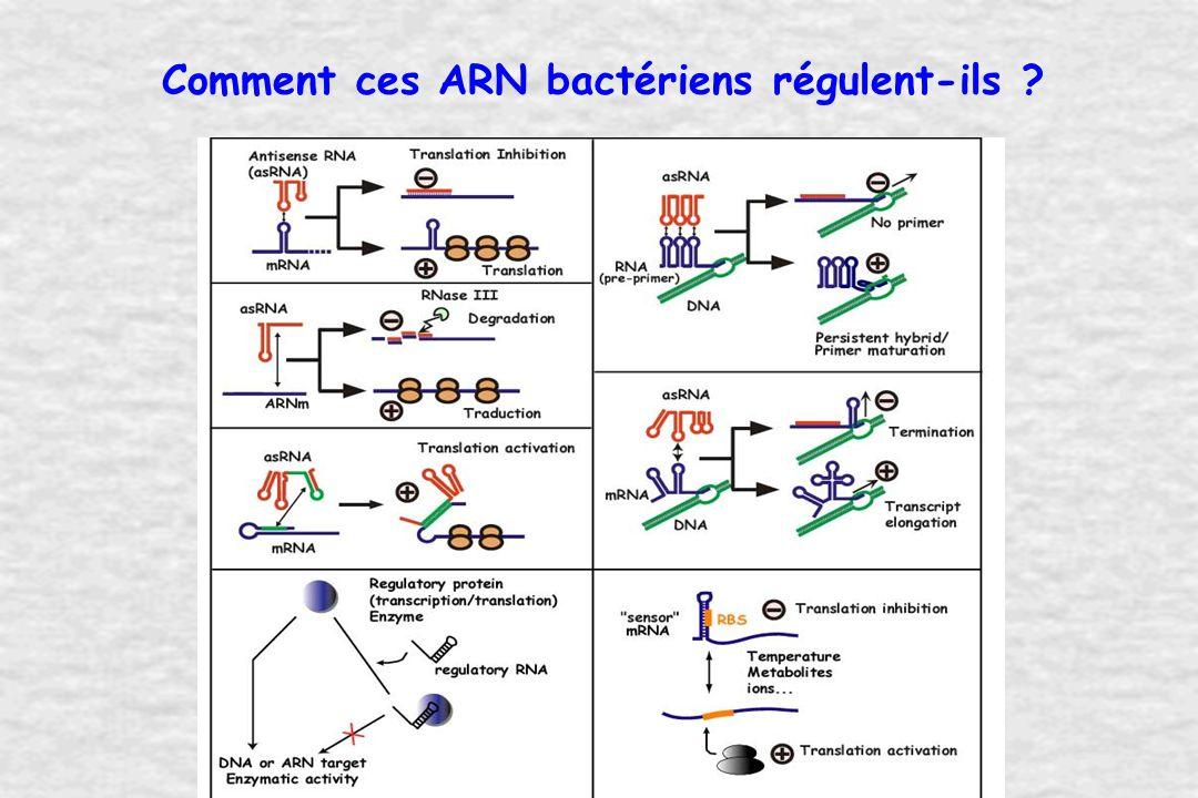 Stratégie Analyse globale de lexpression dARN bactériens Sélection Fonction Structure Ligands