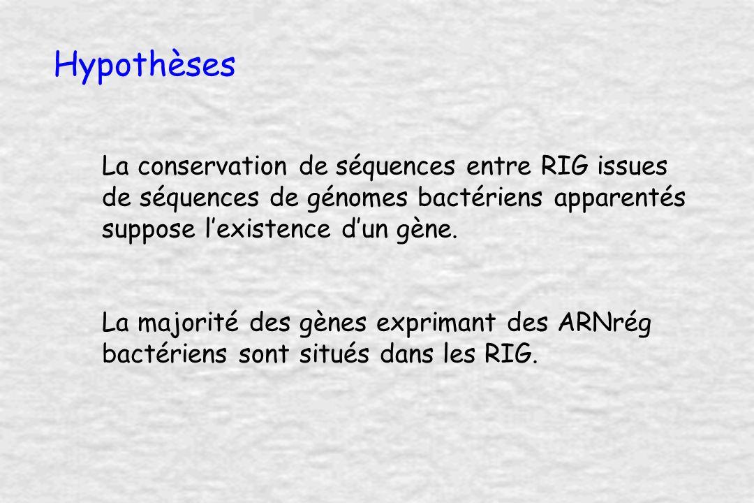 Extraction des régions inter-géniques ATGStopATGStop ORF 1ORF 2 Pr Tr Pr Tr R.I.G.
