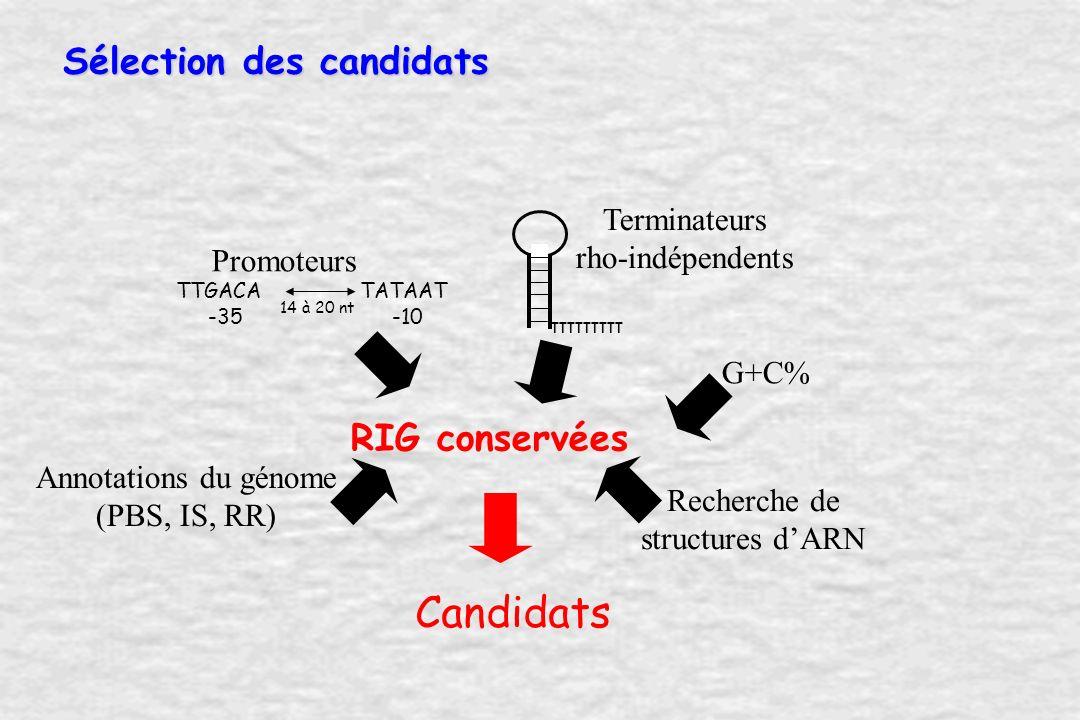 Sélection des candidats Terminateurs rho-indépendents G+C% Recherche de structures dARN RIG conservées Annotations du génome (PBS, IS, RR) Candidats TTTTTTTTT TTGACA -35 TATAAT -10 14 à 20 nt Promoteurs