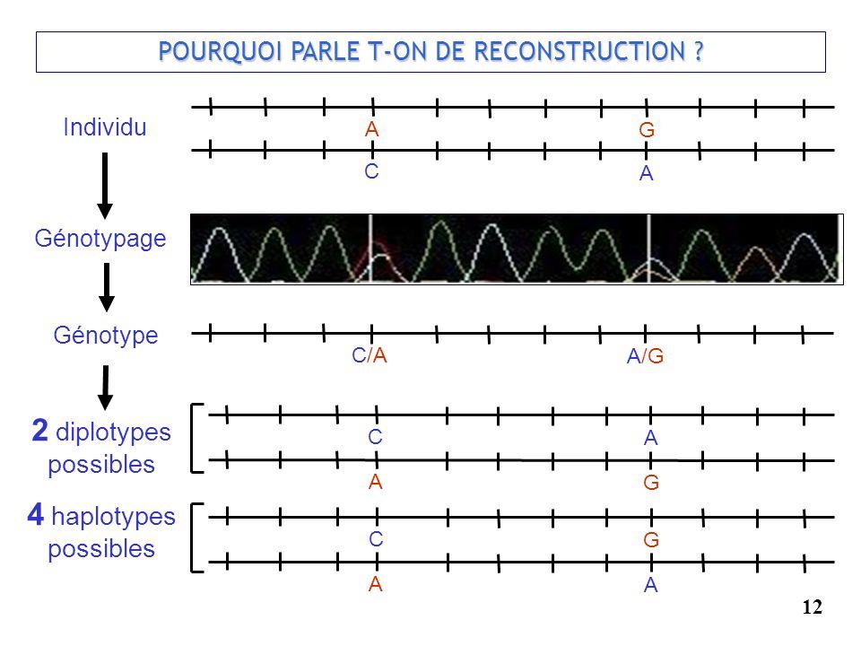 12 POURQUOI PARLE T-ON DE RECONSTRUCTION ? Génotypage Individu C A A G C/A A/G C A A G C G A A Génotype 2 diplotypes possibles 4 haplotypes possibles