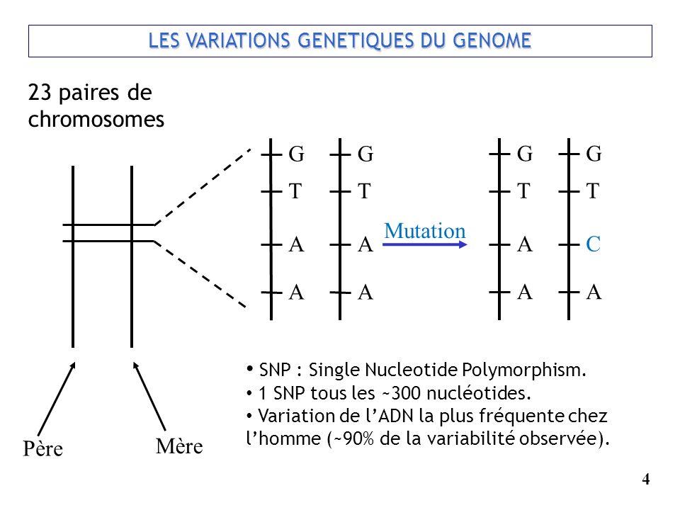 4 LES VARIATIONS GENETIQUES DU GENOME Père Mère G T A A G T A A 23 paires de chromosomes Mutation G T A A G T C A SNP : Single Nucleotide Polymorphism