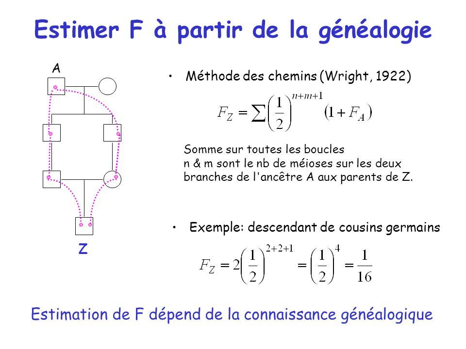 Estimer F à partir de la généalogie Méthode des chemins (Wright, 1922) Z Somme sur toutes les boucles n & m sont le nb de méioses sur les deux branche