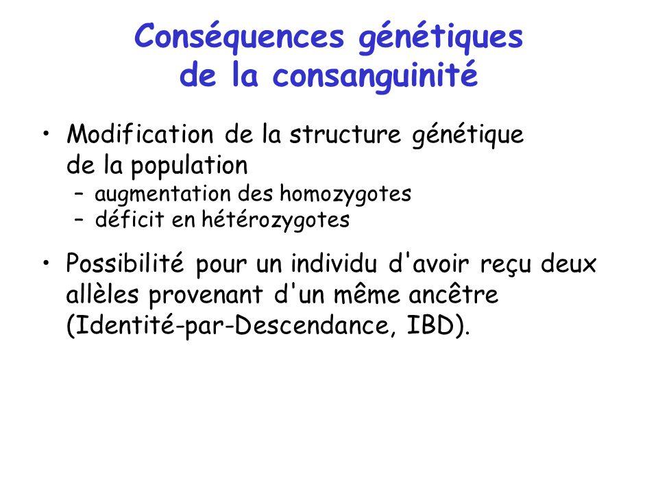 Conséquences génétiques de la consanguinité Modification de la structure génétique de la population –augmentation des homozygotes –déficit en hétérozy