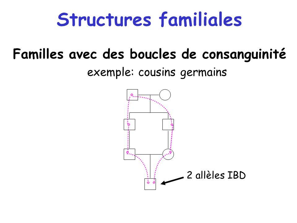 Structures familiales Familles avec des boucles de consanguinité exemple: cousins germains 2 allèles IBD