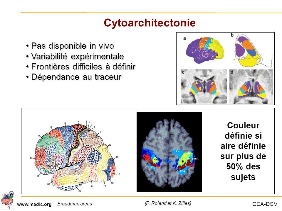 CEA-DSV www.madic.org Cytoarchitectonie [P. Roland et K. Zilles] Broadman areas Couleur définie si aire définie sur plus de 50% des sujets Pas disponi