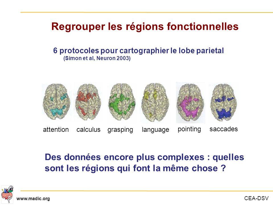 CEA-DSV www.madic.org Regrouper les régions fonctionnelles 6 protocoles pour cartographier le lobe parietal (Simon et al, Neuron 2003) attentioncalcul