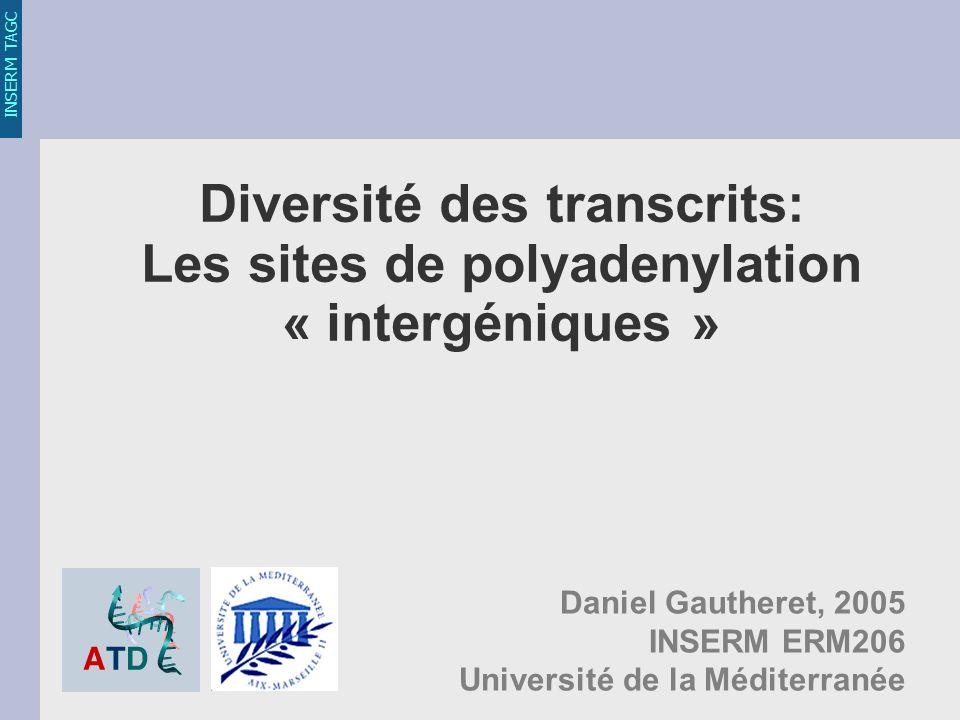 INSERM TAGC Diversité des transcrits: Les sites de polyadenylation « intergéniques » Daniel Gautheret, 2005 INSERM ERM206 Université de la Méditerranée