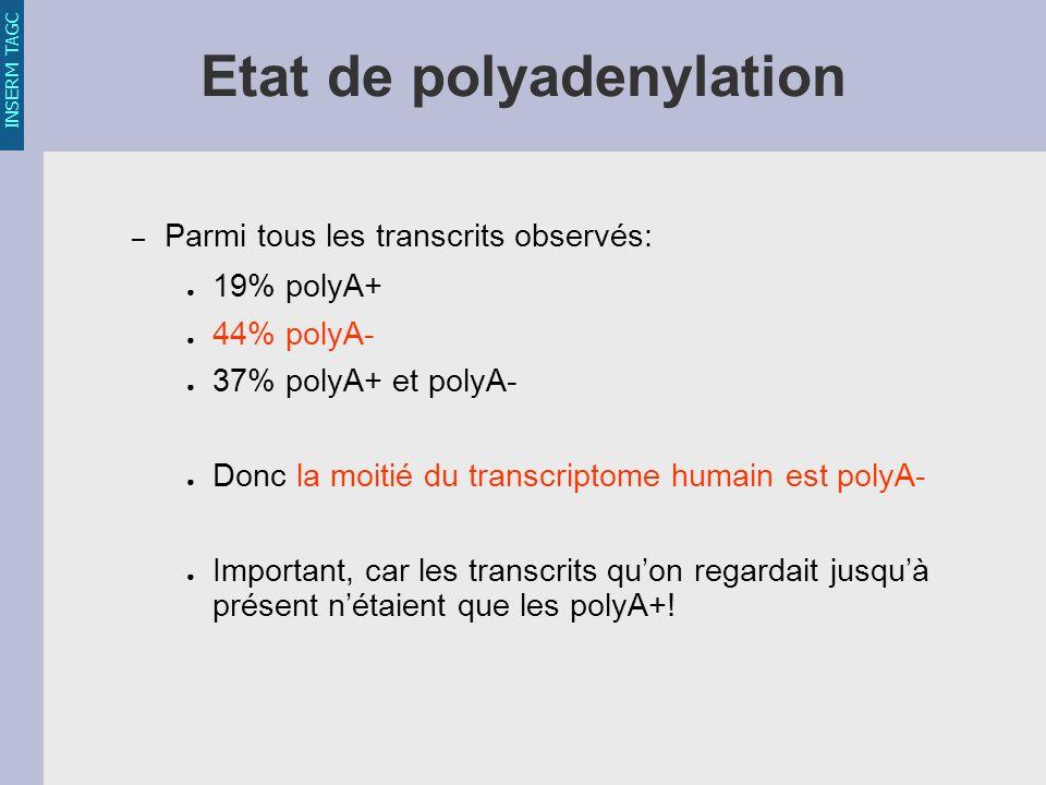 INSERM TAGC Etat de polyadenylation – Parmi tous les transcrits observés: 19% polyA+ 44% polyA- 37% polyA+ et polyA- Donc la moitié du transcriptome humain est polyA- Important, car les transcrits quon regardait jusquà présent nétaient que les polyA+!