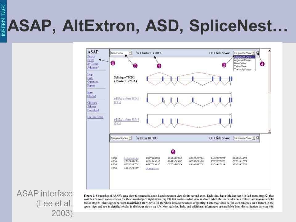 INSERM TAGC ASAP, AltExtron, ASD, SpliceNest… ASAP interface (Lee et al. 2003)