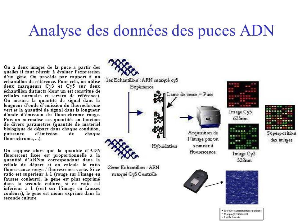 Analyse des données des puces ADN On a deux images de la puce à partir des quelles il faut réussir à évaluer lexpression dun gène. On procède par rapp