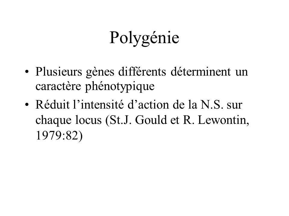 Polygénie Plusieurs gènes différents déterminent un caractère phénotypique Réduit lintensité daction de la N.S. sur chaque locus (St.J. Gould et R. Le
