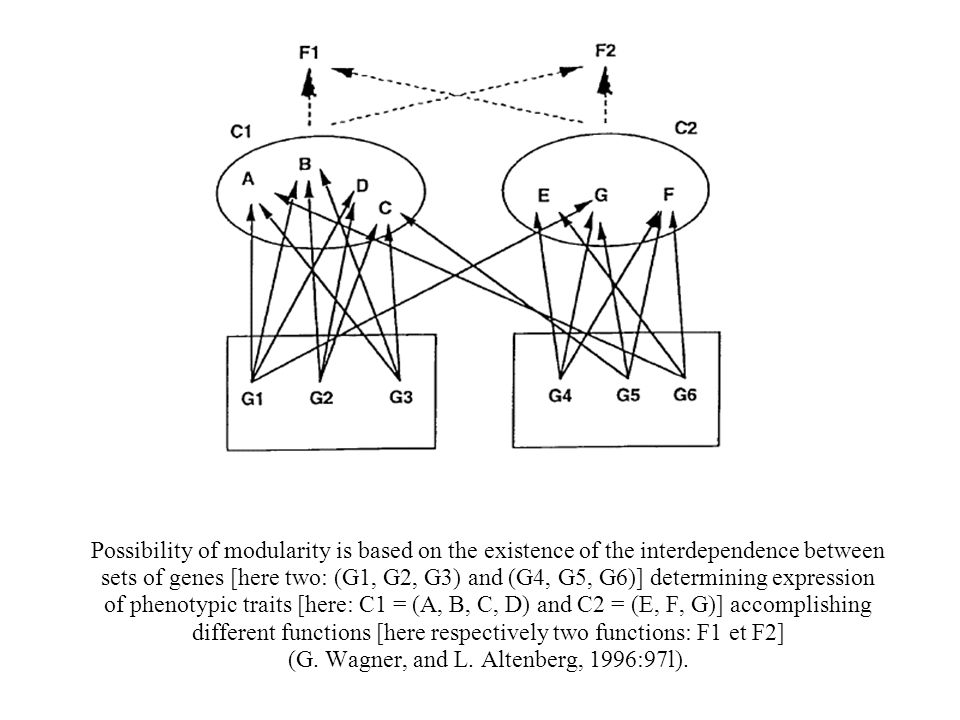 Possibility of modularity is based on the existence of the interdependence between sets of genes [here two: (G1, G2, G3) and (G4, G5, G6)] determining expression of phenotypic traits [here: C1 = (A, B, C, D) and C2 = (E, F, G)] accomplishing different functions [here respectively two functions: F1 et F2] (G.