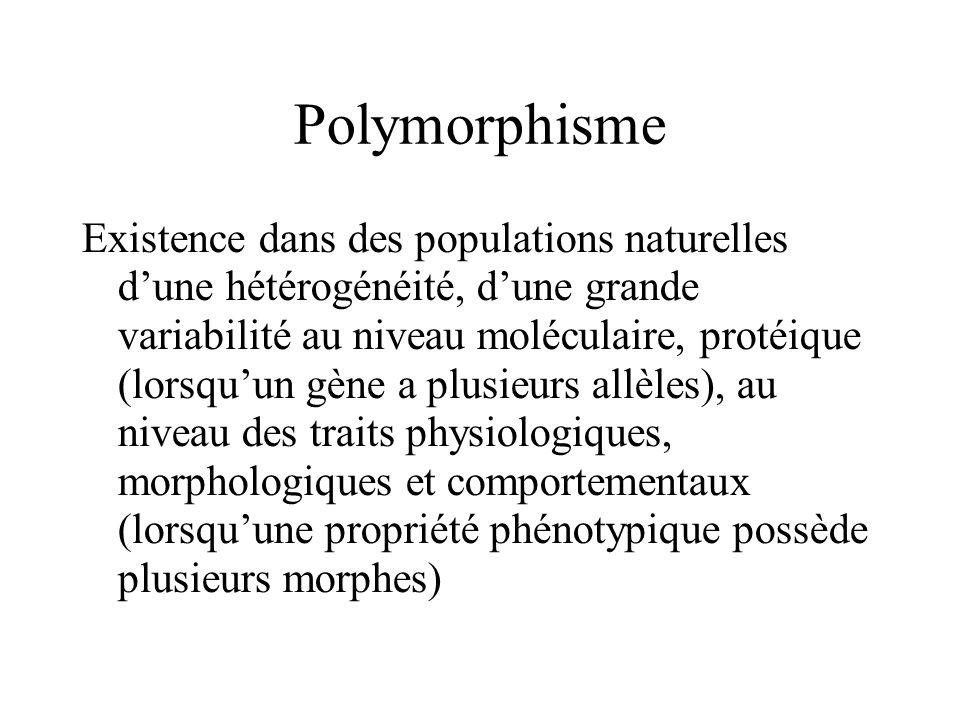 Polymorphisme Existence dans des populations naturelles dune hétérogénéité, dune grande variabilité au niveau moléculaire, protéique (lorsquun gène a plusieurs allèles), au niveau des traits physiologiques, morphologiques et comportementaux (lorsquune propriété phénotypique possède plusieurs morphes)