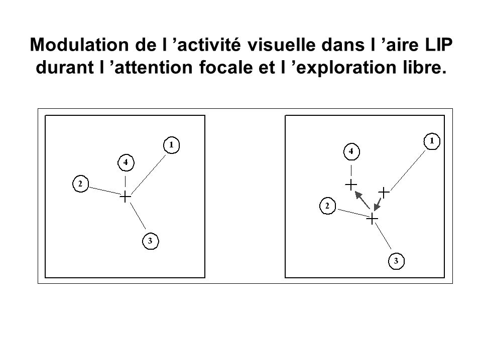 Modulation de l activité visuelle dans l aire LIP durant l attention focale et l exploration libre. Ben Hamed et al., Cereb. Cortex 2001