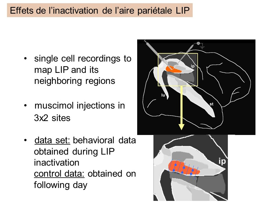single cell recordings to map LIP and its neighboring regions muscimol injections in 3x2 sites data set: behavioral data obtained during LIP inactivat