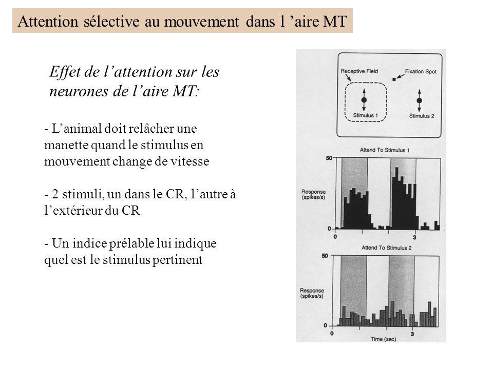 Effet de lattention sur les neurones de laire MT: - Lanimal doit relâcher une manette quand le stimulus en mouvement change de vitesse - 2 stimuli, un