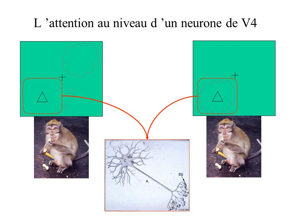 Rapport S/B du codage visuel au niveau de la population des neurones de LIP Signal / bruit