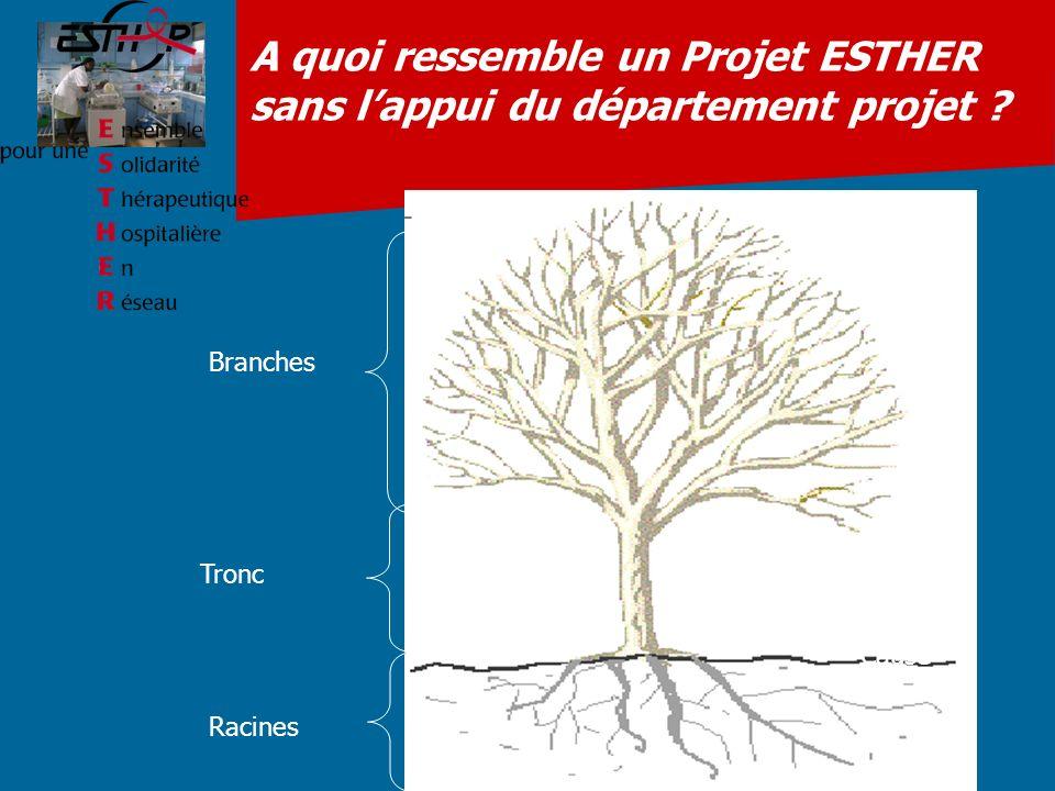 A quoi ressemble un Projet ESTHER sans lappui du département projet ? Racines Tronc Branches Cause