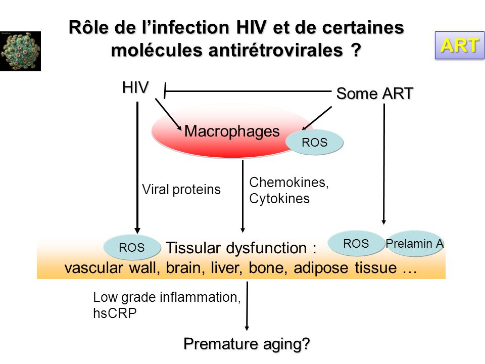 Tissular dysfunction : vascular wall, brain, liver, bone, adipose tissue … Macrophages HIV Some ART Viral proteins Premature aging? Low grade inflamma