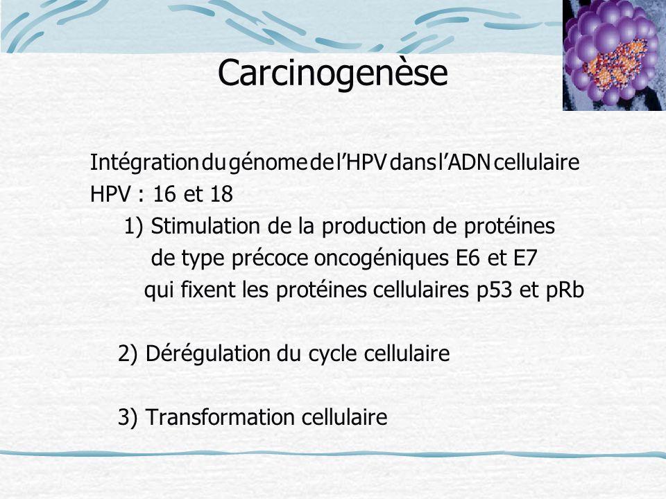 Carcinogenèse Intégration du génome de lHPV dans lADN cellulaire HPV : 16 et 18 1) Stimulation de la production de protéines de type précoce oncogéniq
