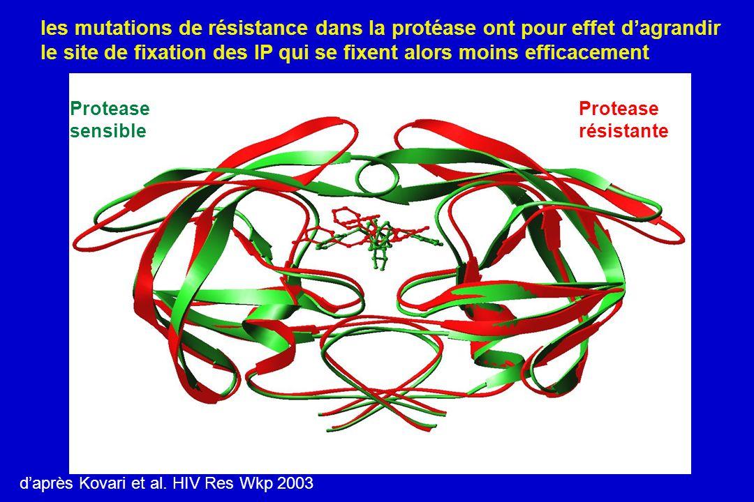 Protease sensible Protease résistante daprès Kovari et al. HIV Res Wkp 2003 les mutations de résistance dans la protéase ont pour effet dagrandir le s