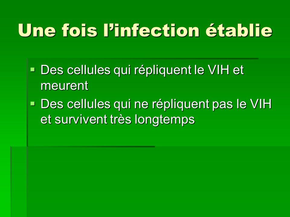 Une fois linfection établie Des cellules qui répliquent le VIH et meurent Des cellules qui répliquent le VIH et meurent Des cellules qui ne répliquent