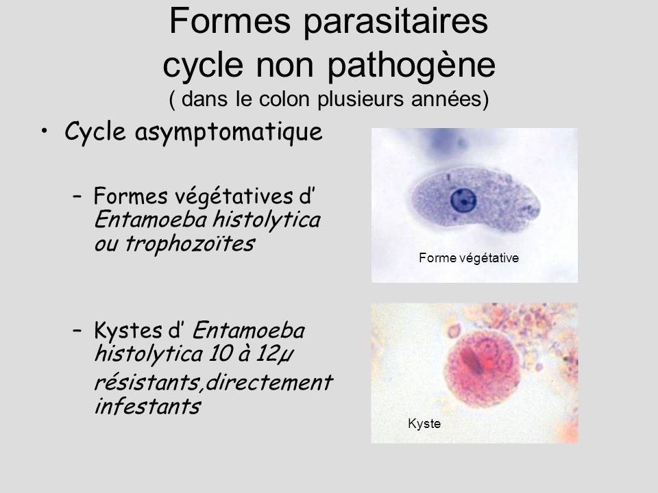 Formes parasitaires cycle non pathogène ( dans le colon plusieurs années) Cycle asymptomatique –Formes végétatives d Entamoeba histolytica ou trophozo
