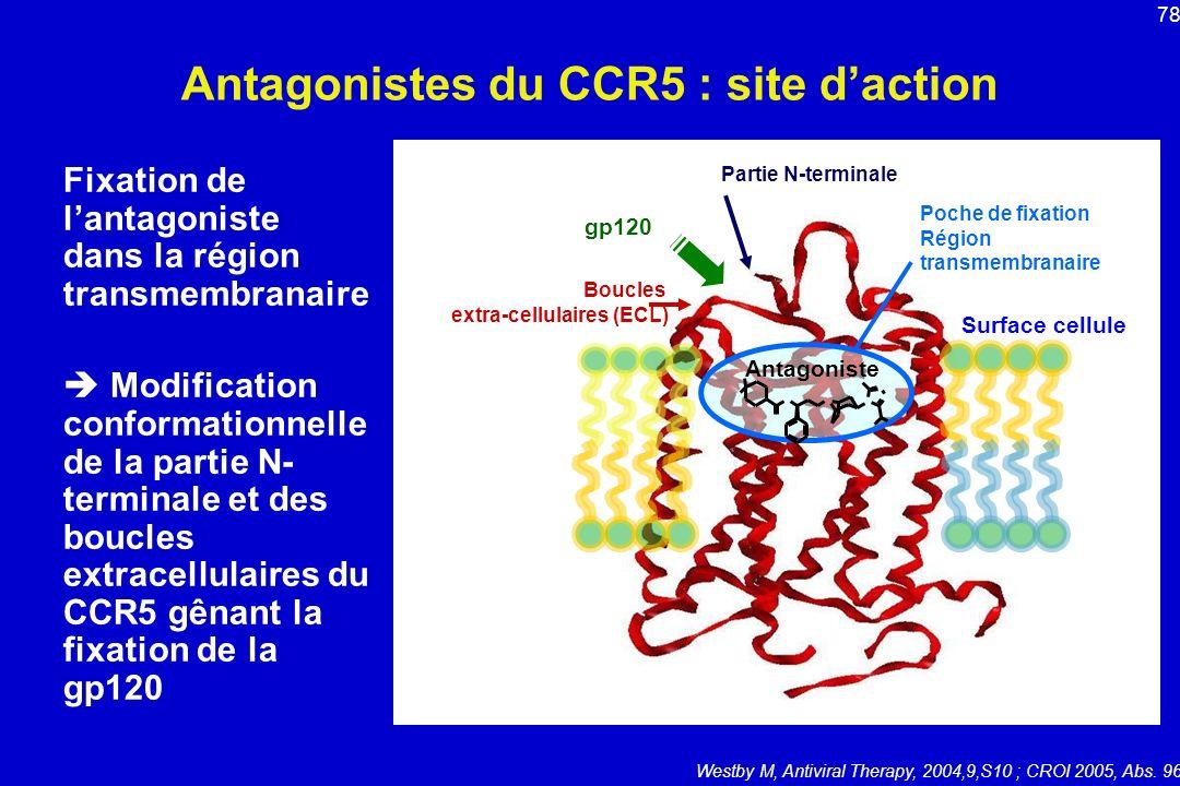 Antagonistes du CCR5 : site daction Fixation de lantagoniste dans la région transmembranaire Modification conformationnelle de la partie N- terminale