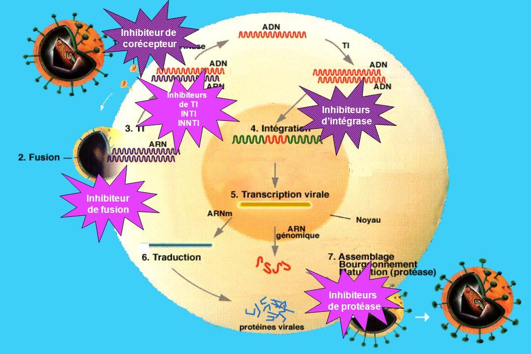 Inhibiteur de fusion Inhibiteur de corécepteur Inhibiteurs de TI INTI INNTI Inhibiteurs dintégrase Inhibiteurs de protéase